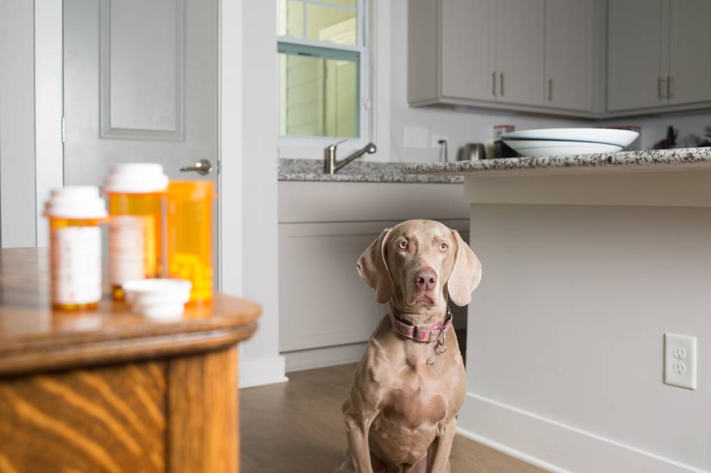 AWARE: Protect your pet from household dangers by knowing the risks. Picture: Shutterstock