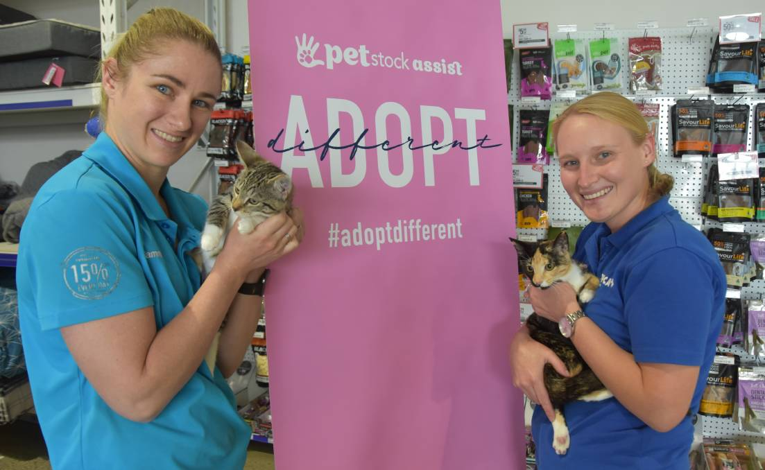 ADOPTION: Tammie Gudzenovs from PETstock Port Lincoln and Isabel Thorne from RSPCA Port Lincoln introduce two cats up for adoption, Gidget and Bluey.